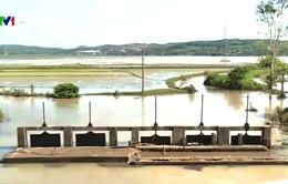 Hơn 300 ha lúa Nam Trung Bộ bị ngập úng do mưa lũ bất thường