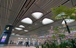 """Trải nghiệm tại nhà ga """"không nhân viên"""" sân bay Changi, Singapore"""