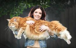 Chú mèo lập kỷ lục thế giới với chiều dài 1,2m
