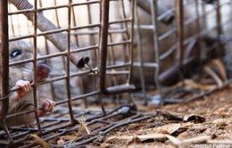 Tử vong do dịch hạch tại Madagascar đã lên tới 124 người