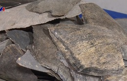 Pháp thu giữ lô mai rùa lớn