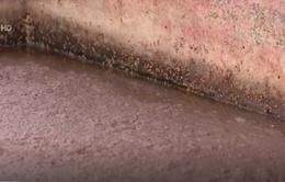 Mẫu mắm tôm Phương Nhung chứa chất bảo quản vượt ngưỡng