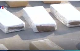 Bolivia bắt giữ hơn 5 tấn cần sa