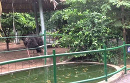 Vườn thú Đầm Sen hướng đến là thành viên Hiệp hội Các vườn thú Đông Nam Á
