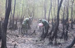 Vụ cháy hơn 36 ha rừng tràm: Do tàn thuốc lá
