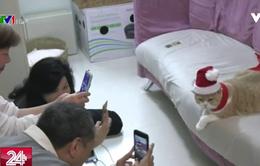 Kinh doanh phát đạt nhờ... các chú mèo ở Hong Kong (Trung Quốc)