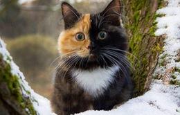 """Thích thú với cô mèo Yana với hai nửa khuôn mặt """"khác biệt"""""""