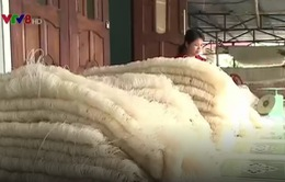 Quảng Nam: Thanh niên được tiếp cận nhiều nguồn vốn vay ưu đãi