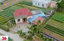 Miền quê của những vườn rau hạnh phúc
