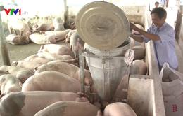 Bình Định triển khai miễn thuế liên quan đến tiêu thụ thịt lợn