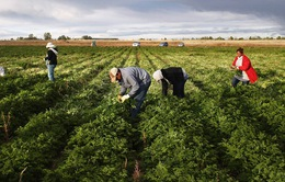 Tổng thống Mỹ đề xuất giảm nhập cư theo diện thân nhân