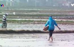 Người dân vùng lũ khôi phục sản xuất trong ngày đầu năm