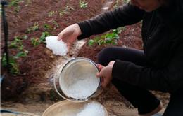 Mưa đá, lốc xoáy gây thiệt hại nặng tại Đà Lạt