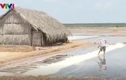 Ninh Thuận: Diêm dân thiệt hại do mưa trái mùa