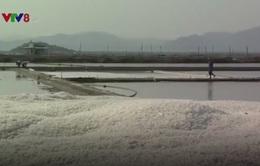 """Phú Yên: Công bố nhãn hiệu chứng nhận """"Muối Tuyết Diêm"""""""