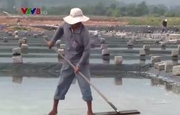 Khánh Hòa: Vướng mắc hỗ trợ diêm dân sản xuất muối kết tinh trên bạt