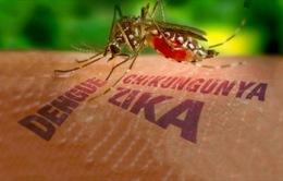 Khánh Hòa chưa thả muỗi phòng chống sốt xuất huyết và Zika