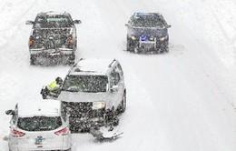 Dự báo tuyết dày cả nửa mét, Đông Bắc Mỹ ban bố tình trạng khẩn cấp