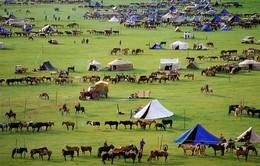 Lễ hội đua ngựa mùa Đông trên thảo nguyên tại Mông Cổ