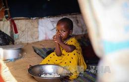 Hơn 100 người tử vong do nạn đói tại Somalia