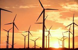 Năng lượng tái tạo tiếp tục có bước tiến mạnh mẽ