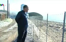 Nông dân Pháp lo lắng vì dịch cúm gia cầm