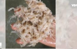 Giật mình công nghệ sản xuất nem chua rán tẩm hóa chất