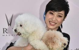 Bầu bạn với cún, Hoa hậu Hong Kong Trần Pháp Dung không sợ cô đơn