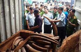 Phát hiện nhiều sản phẩm chế tác từ ngà voi tại Gia Lai