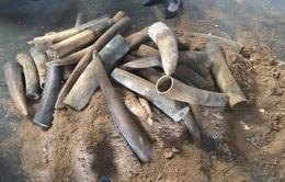 Phát hiện hàng trăm kg ngà voi cất giấu tinh vi trong thùng phuy nhựa đường