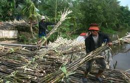 Nâng cao khả năng cạnh tranh cho ngành mía đường Việt Nam
