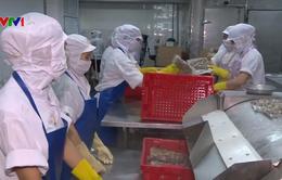 Thái Bình xuất khẩu ngao sạch đi nhiều nước