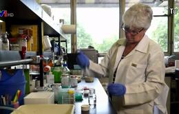 Thử nghiệm hiệu quả vaccine phòng virus Zika trên khỉ