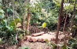 Tan hoang rừng tự nhiên tại huyện Quỳ Hợp, Nghệ An