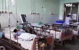 Ăn ốc lạ, cả nhà nhập viện, 1 người chết lâm sàng