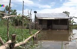 Ngập úng kéo dài tại lâm phần rừng tràm U Minh