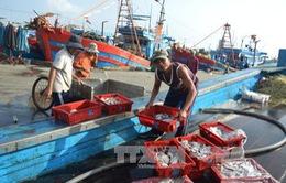 Ngư dân Đà Nẵng tất bật vươn khơi giáp Tết