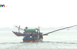 Bất chấp lệnh cấm, ngư dân vẫn ra khơi đánh bắt