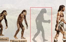 Phát hiện mới về nguồn gốc con người