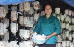 Gặp gỡ người phụ nữ quyết tâm làm giàu từ cây nấm (17h25, 10/2, VTV1)