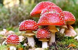 Những điều cần lưu ý khi bị ngộ độc nấm rừng