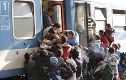 EU chia rẽ vì phán quyết về hạn ngạch nhập cư