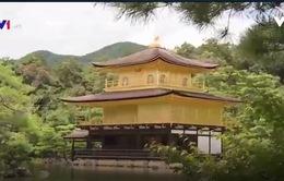 Khách Việt chi mạnh ở Nhật Bản