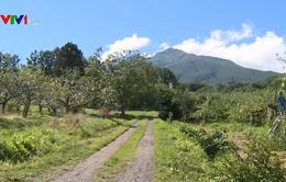 Nhật Bản thúc đẩy tự do hóa thị trường nông nghiệp