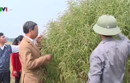 """Quỹ hỗ trợ giải quyết cơn """"khát"""" vốn cho nông dân"""