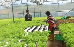 Đà Lạt đầu tư nông nghiệp công nghệ cao