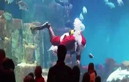 Ông già Noel bơi cùng… cá mập