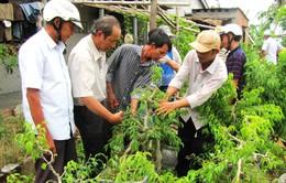Hơn 2.000 tỷ đồng đào tạo nghề cho nông dân trong 3 năm
