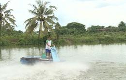 ĐBSCL: Nông dân ồ ạt thả nuôi cá tra