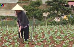 Ách tắc tín dụng phát triển nông nghiệp công nghệ cao